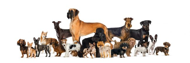 Group of 18 dog breeds