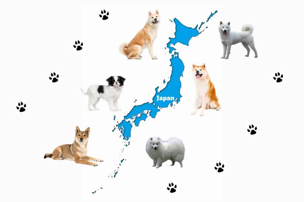 Japanese dog breeds illustration