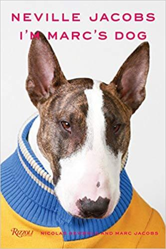 Neville, the Bull terrier wearing wearing orange with blue shirt