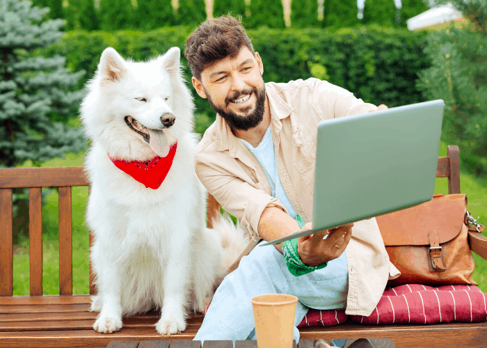 Owner showing his white Siberian husky online with friends
