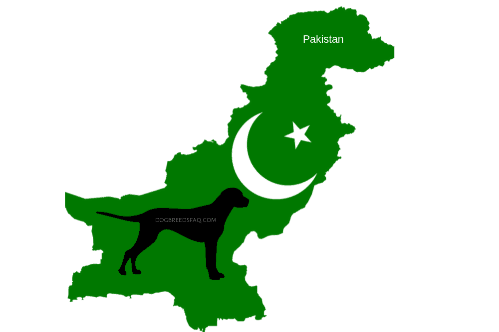 Discover 3 Rare And Historical Pakistan Dog Breeds