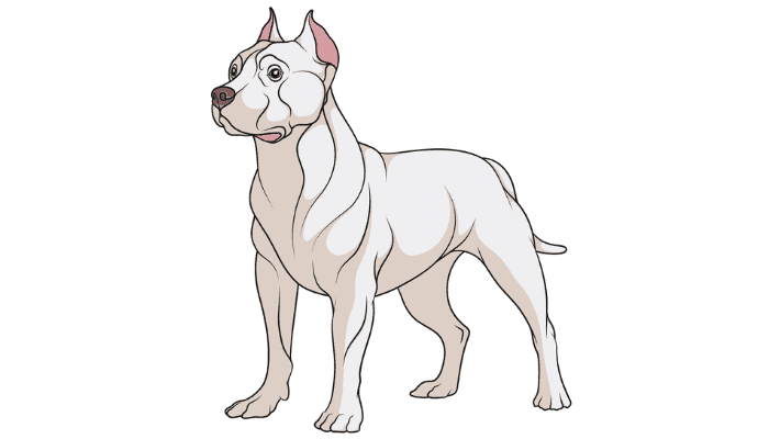 Pit Bull Dog Breed Description