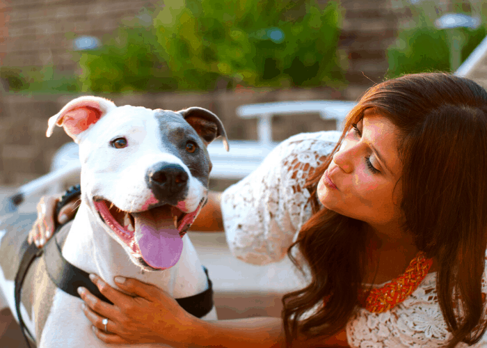 Pit Bull Lying and its lady owner
