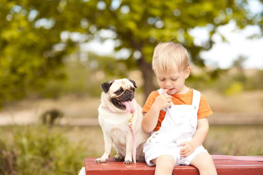 Pug sitting with a kid