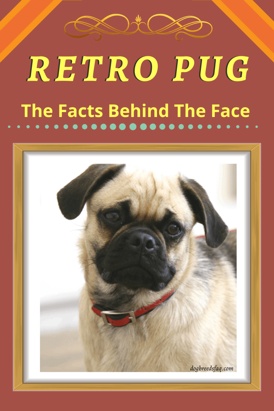 RETRO PUG pinterest pin
