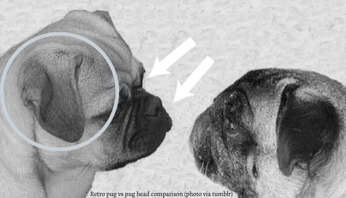 Retro pug vs pug head comparison
