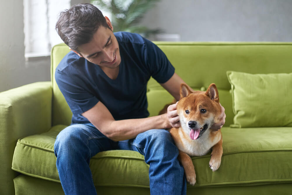 Shiba Inu and its owner who is wearing a blue shirt are sitting on a long green sofa