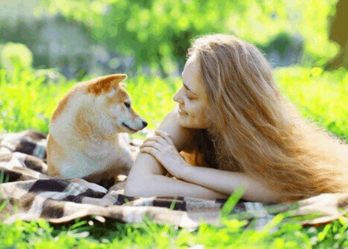 Shiba Inu and lady owner relaxing in a park