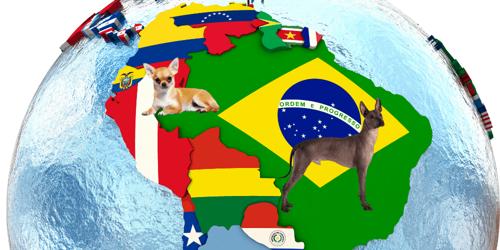 2 South American Dog Breeds
