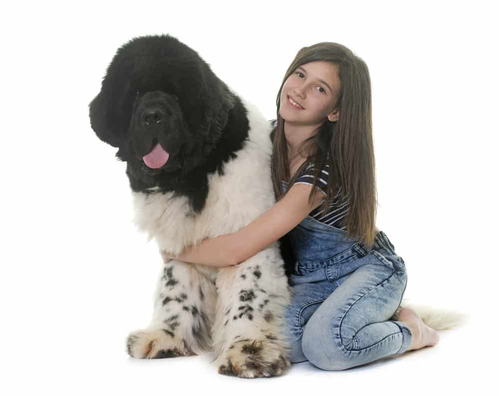 Teenager and newfoundland dog on white background