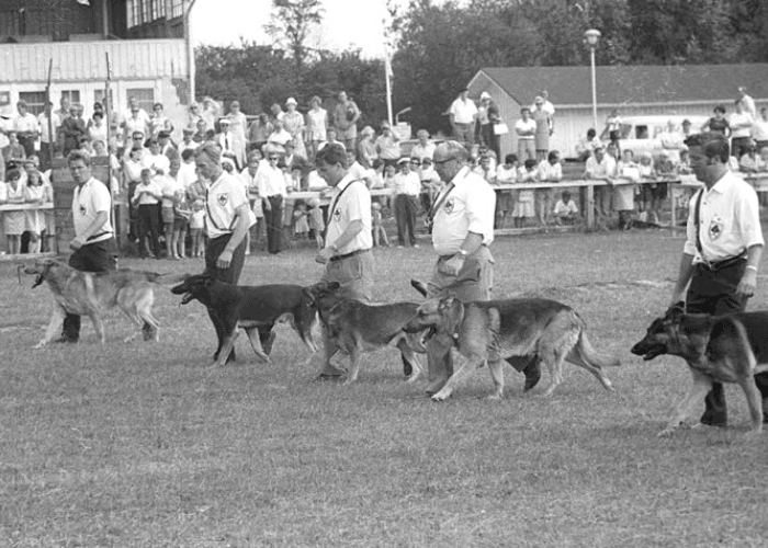 The Club for German Shepherd Dogs vintage photo
