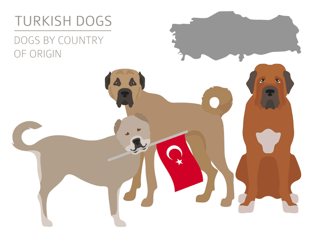 Turkish dog breeds with national flag