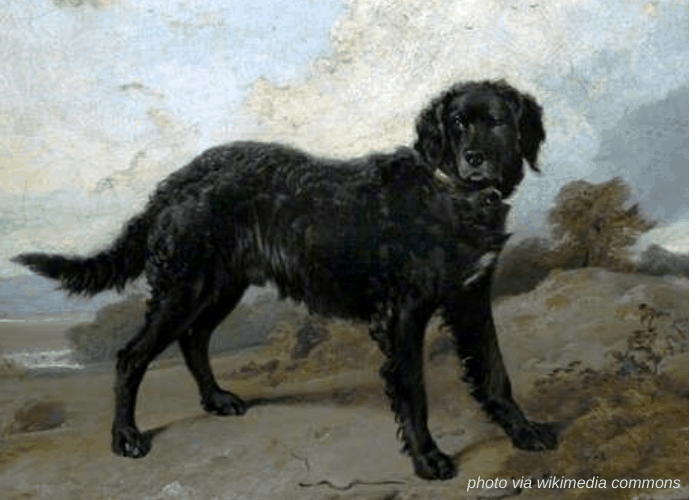 Tweed Water Spaniel vintage photo
