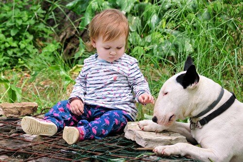 White bull terrier playing with a child in a park sorrounded by green plants and bushes