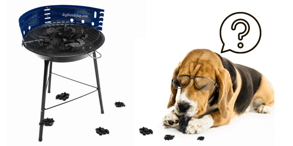 Why Do Dogs Eat Charcoal article featured image