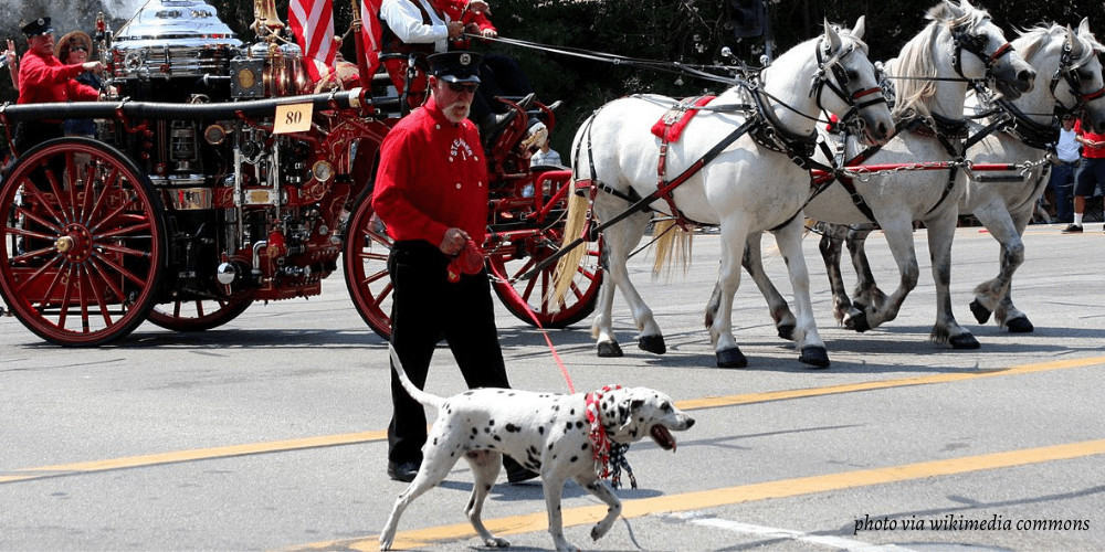 Why are Dalmatians Fire Dogs featured image