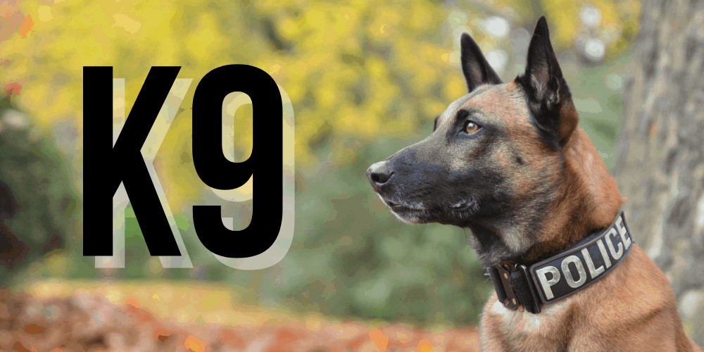 Why are Dogs called K9 featured image