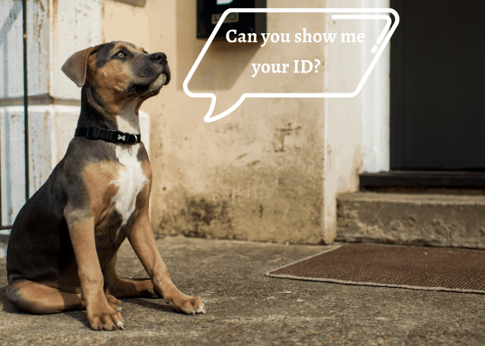 a pit bull asking Can you show me your ID