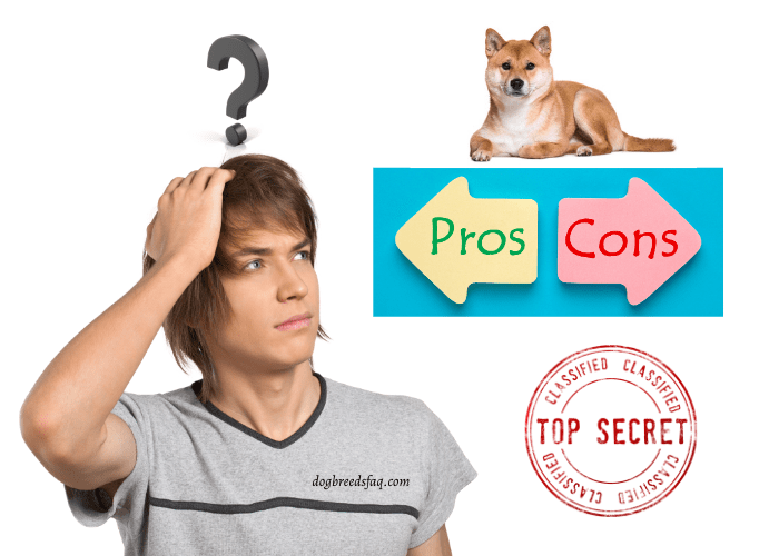 a teenager thinking about shiba inu pros and cons