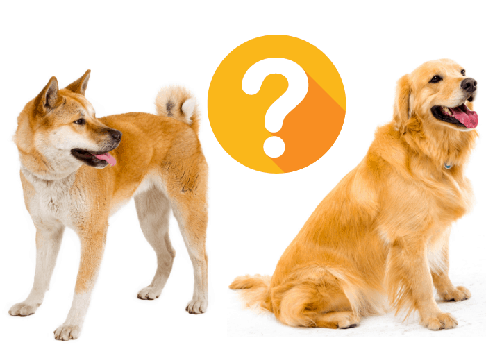 akita and golden retriever with question mark sign between them