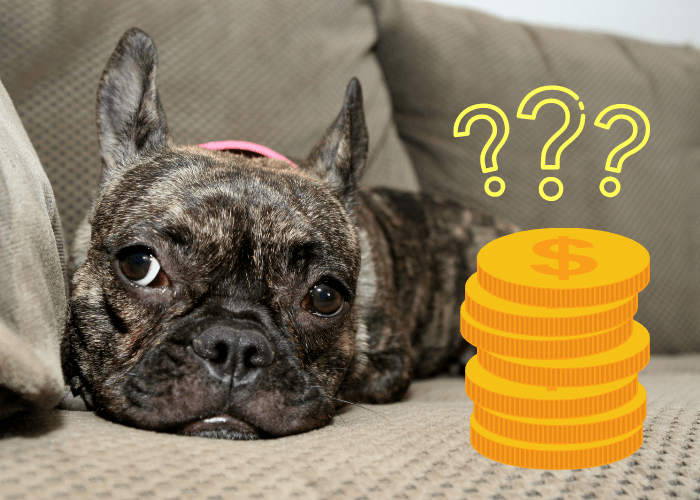 are brindle french bulldog more expensive