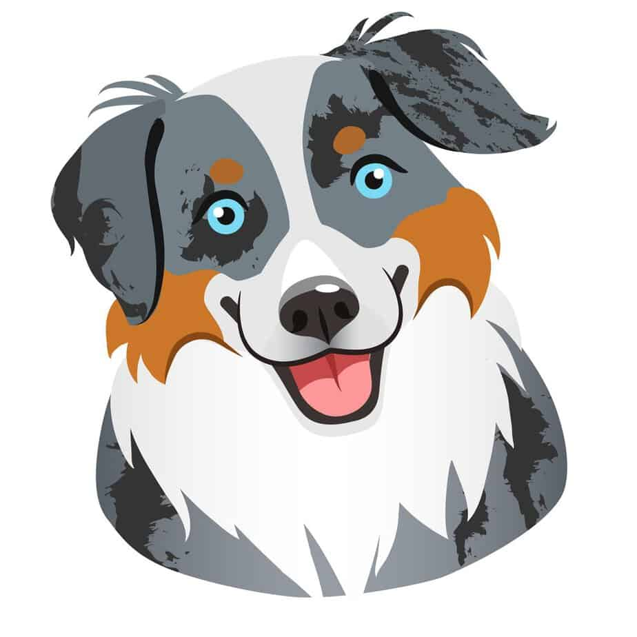 blue eyes Australian shepherd dog face portrait cartoon illustration