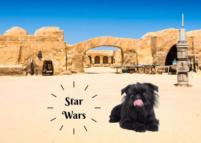 brussells griffon in stars wars film location
