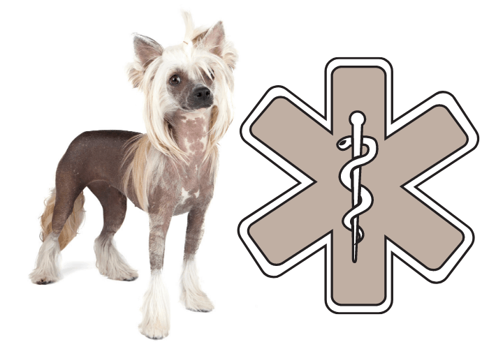 chinese crested dog beside a medical symbol
