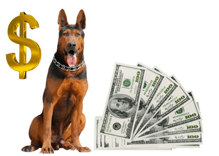 chinese red dog cost image