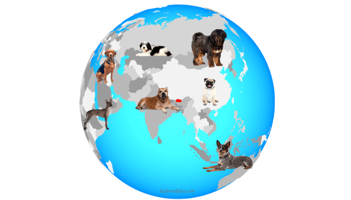 7 different dog breeds from around the globe