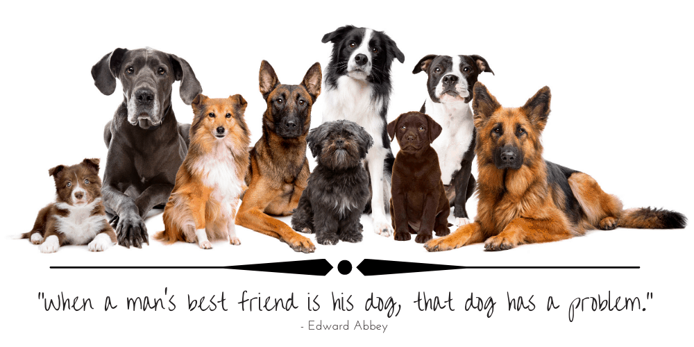 dog breeds website featured image
