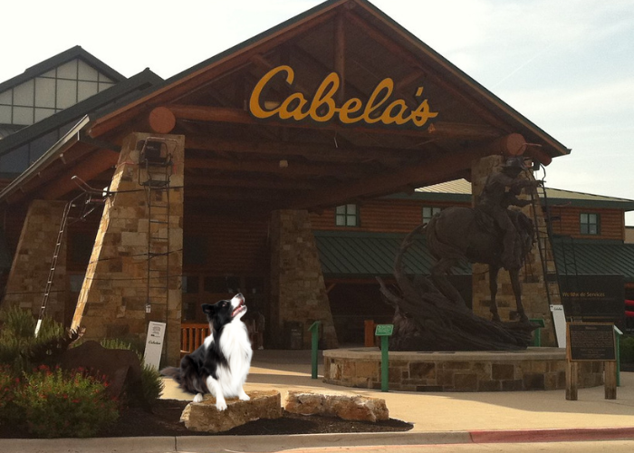 dog in front of cabela's store