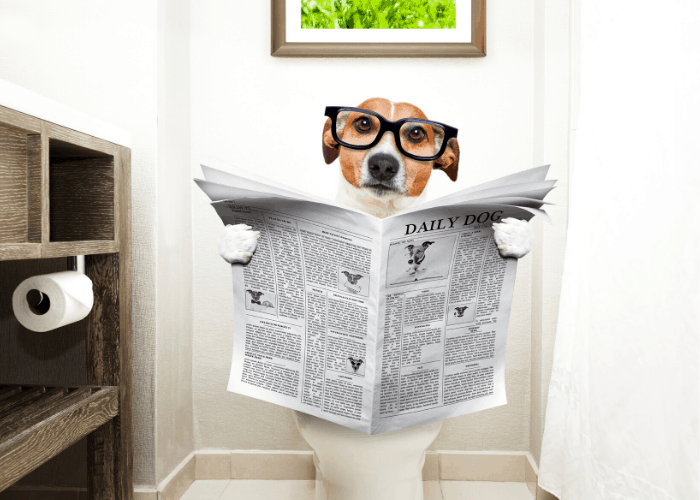 dog reading a newspaper while sitting on a toilet bowl