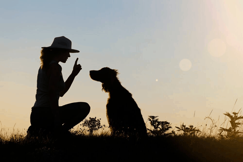 dog training silhoutte