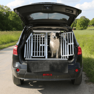 Dog pet inside an unlocked crate in an open car boot wants to travel