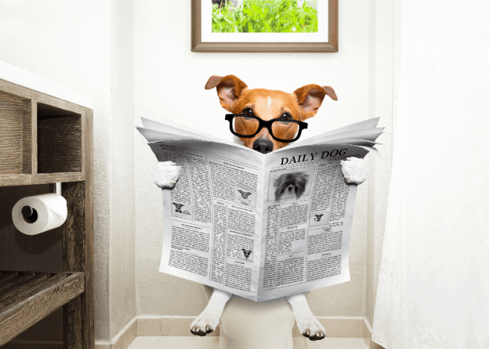 dog with eyeglasses reading newspaper while sitting on a toilet bowl