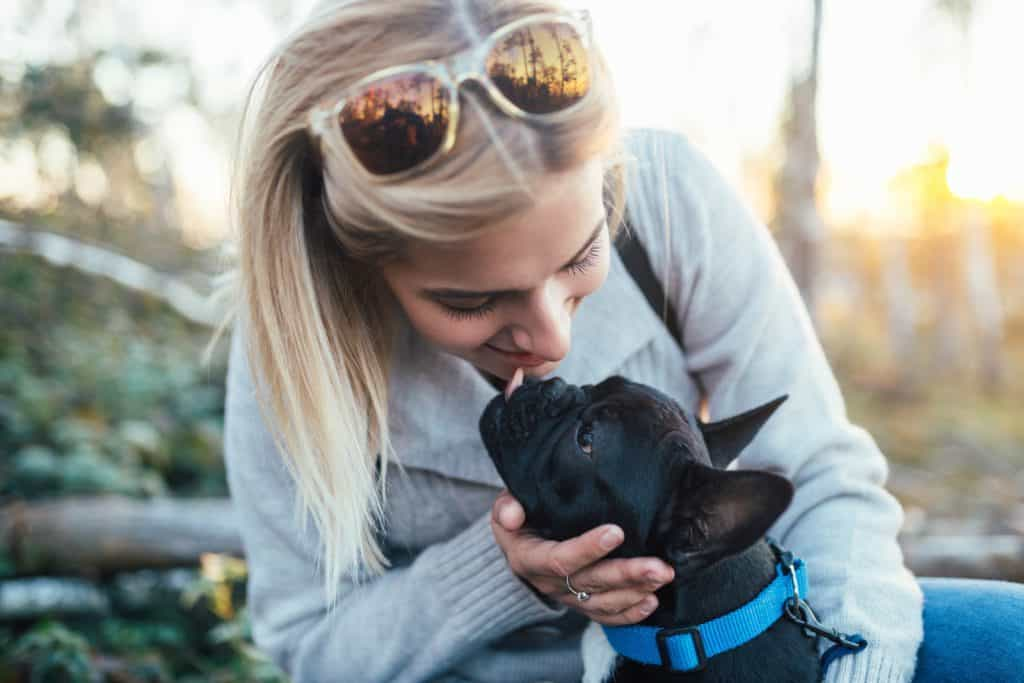 french bulldog licking woman's face