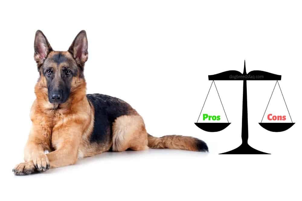 german shepherd pros and cons image