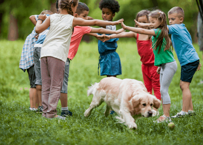 golden retriever playing with kids