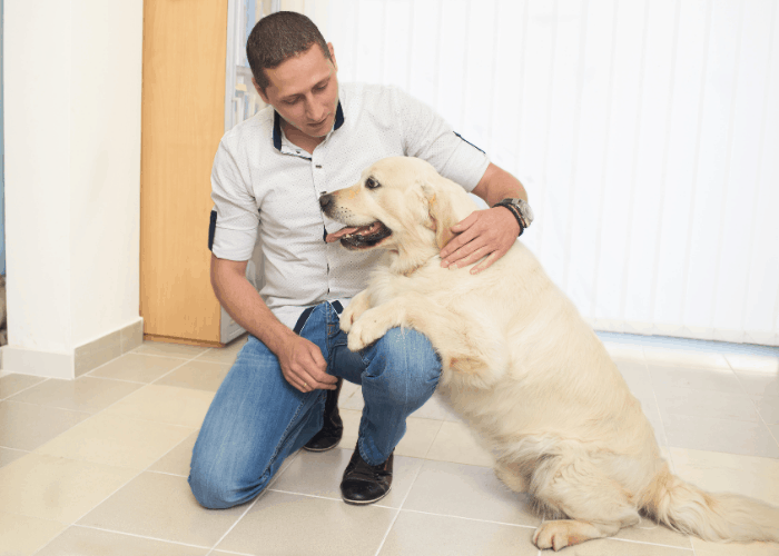 golden retriever with owner at home