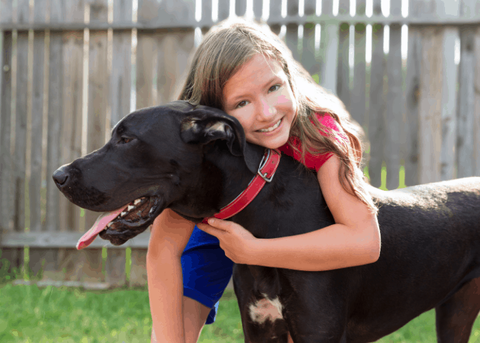 great dane being hugged by a young girl