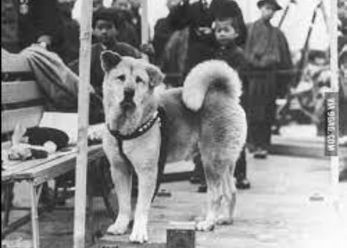 hachiko at the train station