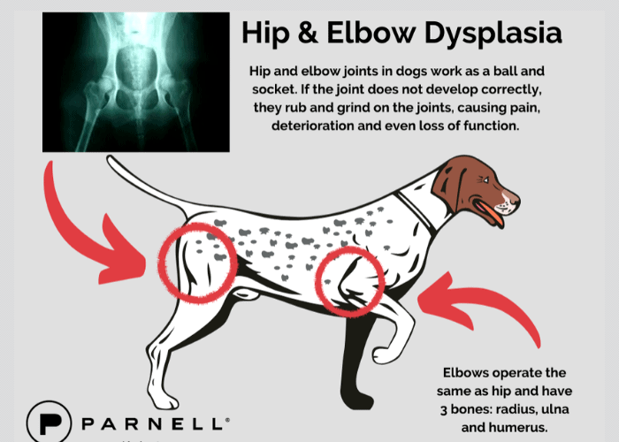 hip and elbow dysplasia in dogs