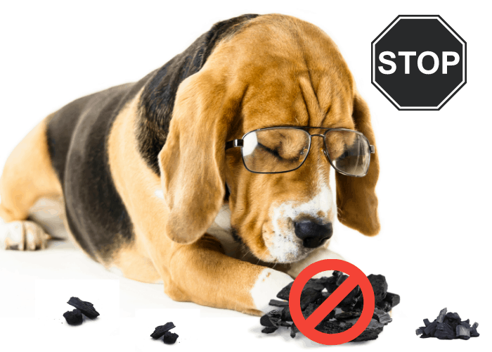 how to stop your dog from eating charcoal image