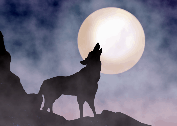 howling dog during full moon