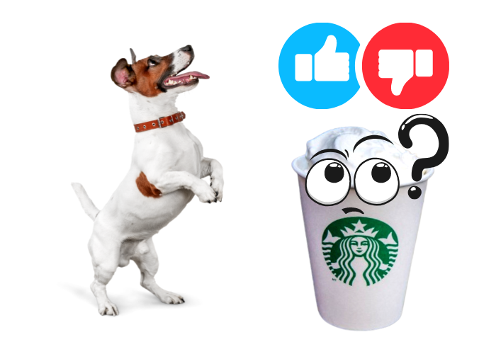 is puppuccino good for dogs image