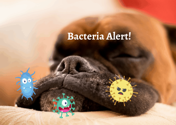 jowls with bacteria cartoon