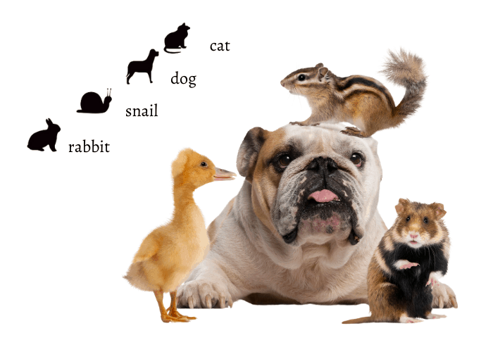 kinds and species of animals