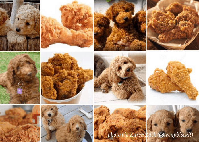 labradoodle or fried chicken twitter post