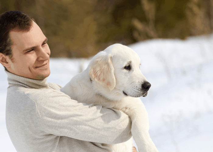 labrador retriever being carried by owner